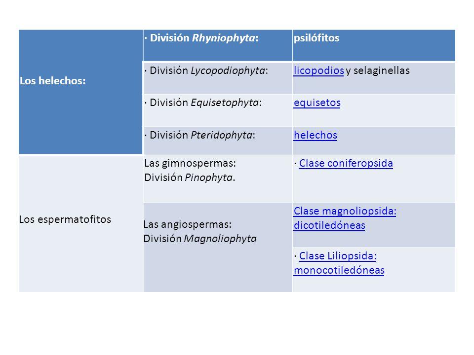 Los helechos: · División Rhyniophyta:psilófitos · División Lycopodiophyta:licopodioslicopodios y selaginellas · División Equisetophyta:equisetos · División Pteridophyta:helechos Los espermatofitos Las gimnospermas: División Pinophyta.