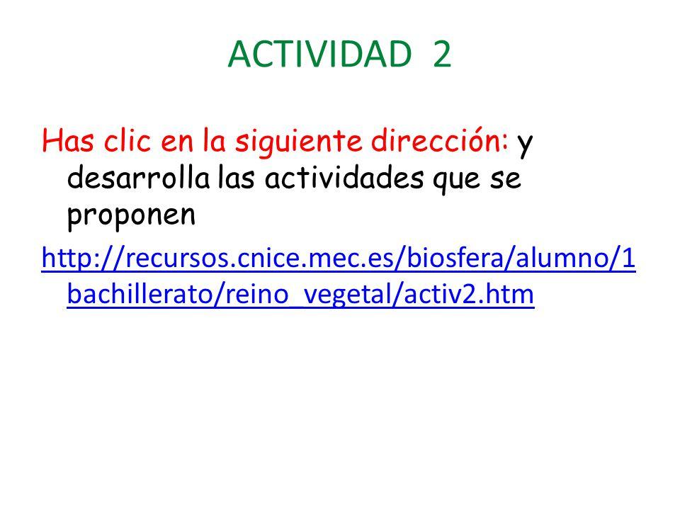 ACTIVIDAD 2 Has clic en la siguiente dirección: y desarrolla las actividades que se proponen http://recursos.cnice.mec.es/biosfera/alumno/1 bachillerato/reino_vegetal/activ2.htm