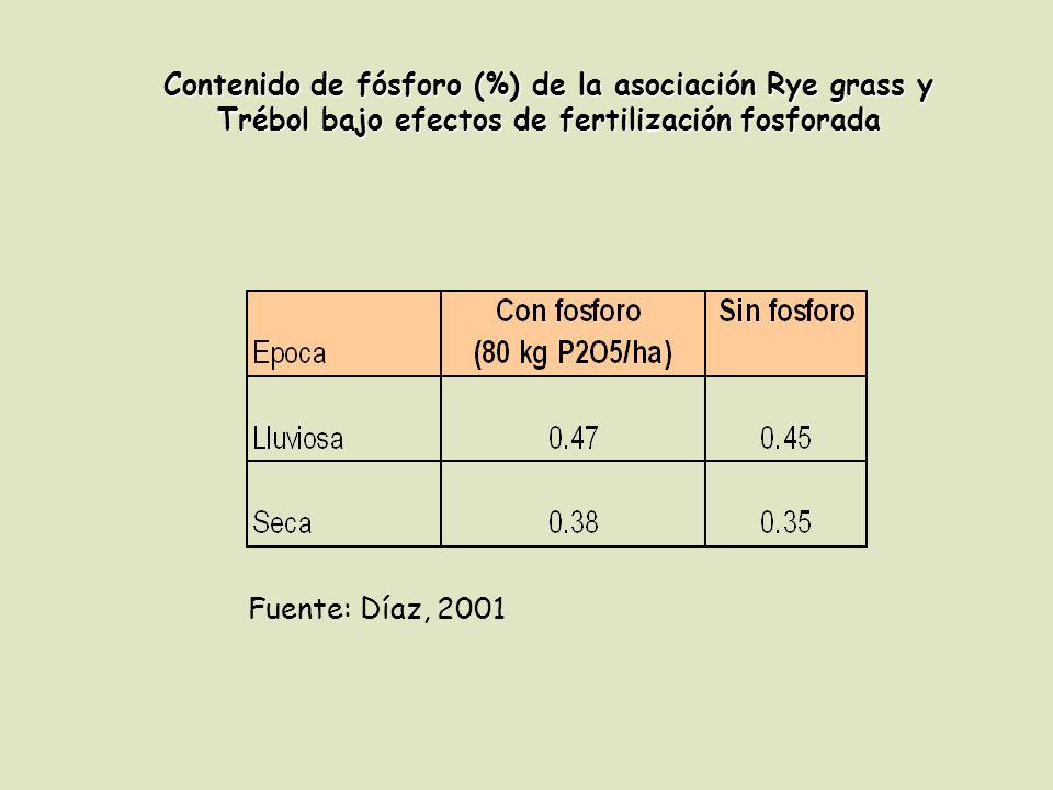 Contenido de fósforo (%) de la asociación Rye grass y Trébol bajo efectos de fertilización fosforada Fuente: Díaz, 2001