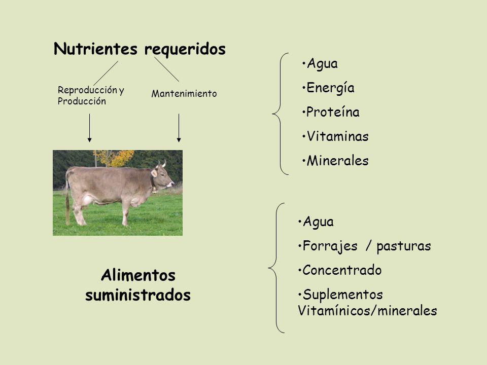Agua Energía Proteína Vitaminas Minerales Agua Forrajes / pasturas Concentrado Suplementos Vitamínicos/minerales Alimentos suministrados Nutrientes re