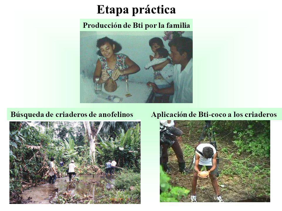 Etapa práctica Producción de Bti por la familia Búsqueda de criaderos de anofelinosAplicación de Bti-coco a los criaderos