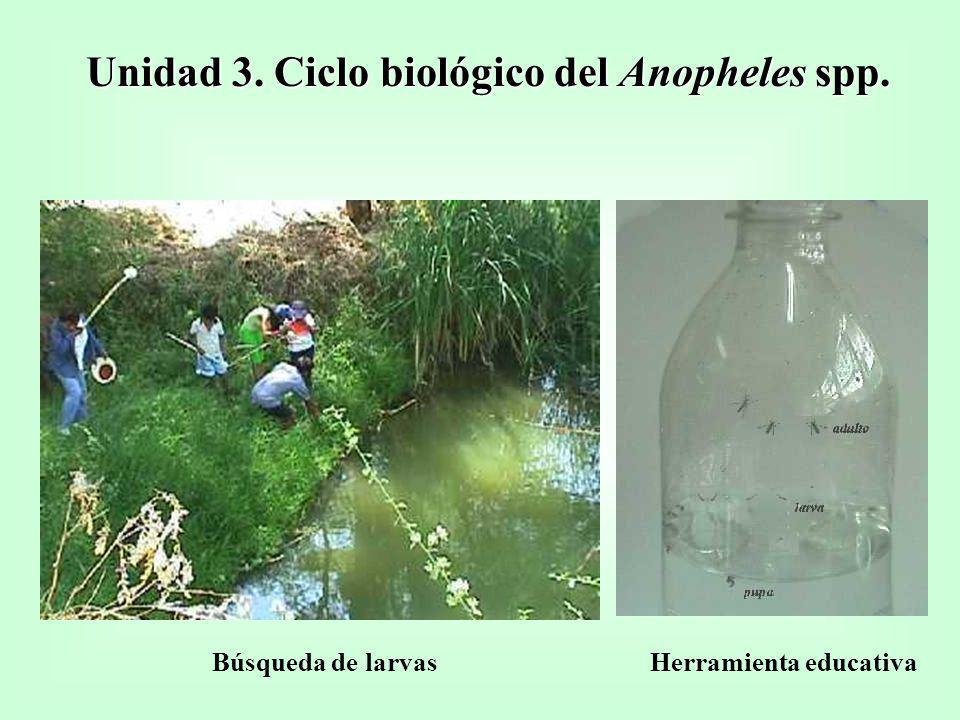 Unidad 3. Ciclo biológico del Anopheles spp. Búsqueda de larvasHerramienta educativa