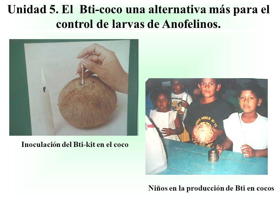 Unidad 5. El Bti-coco una alternativa más para el control de larvas de Anofelinos. Inoculación del Bti-kit en el coco Niños en la producción de Bti en
