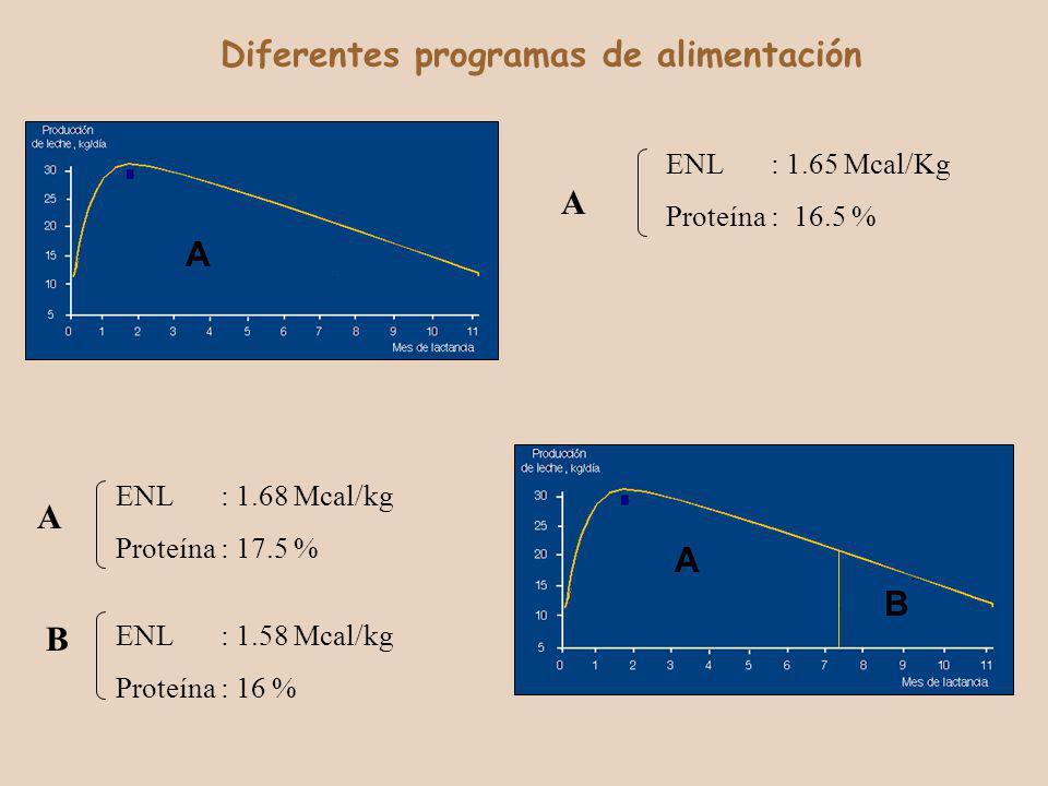 A A B Diferentes programas de alimentación ENL: 1.65 Mcal/Kg Proteína: 16.5 % ENL: 1.68 Mcal/kg Proteína: 17.5 % ENL: 1.58 Mcal/kg Proteína: 16 % A A