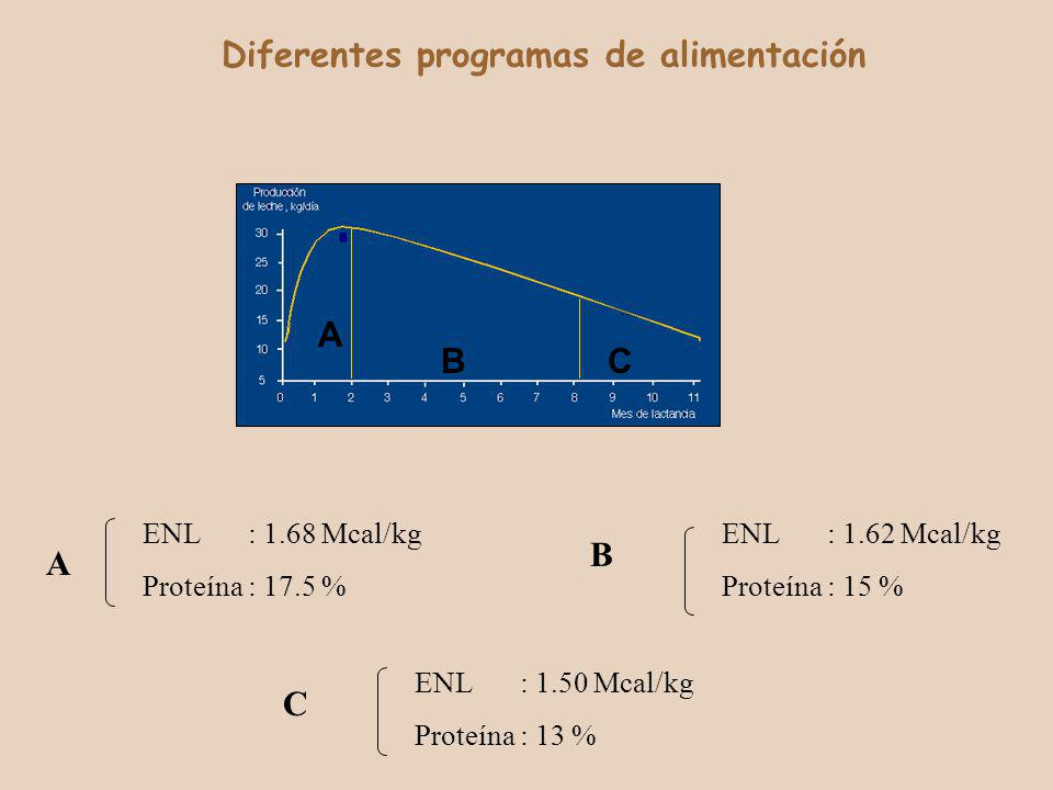 A BC Diferentes programas de alimentación ENL: 1.68 Mcal/kg Proteína: 17.5 % ENL: 1.62 Mcal/kg Proteína: 15 % ENL: 1.50 Mcal/kg Proteína: 13 % A B C