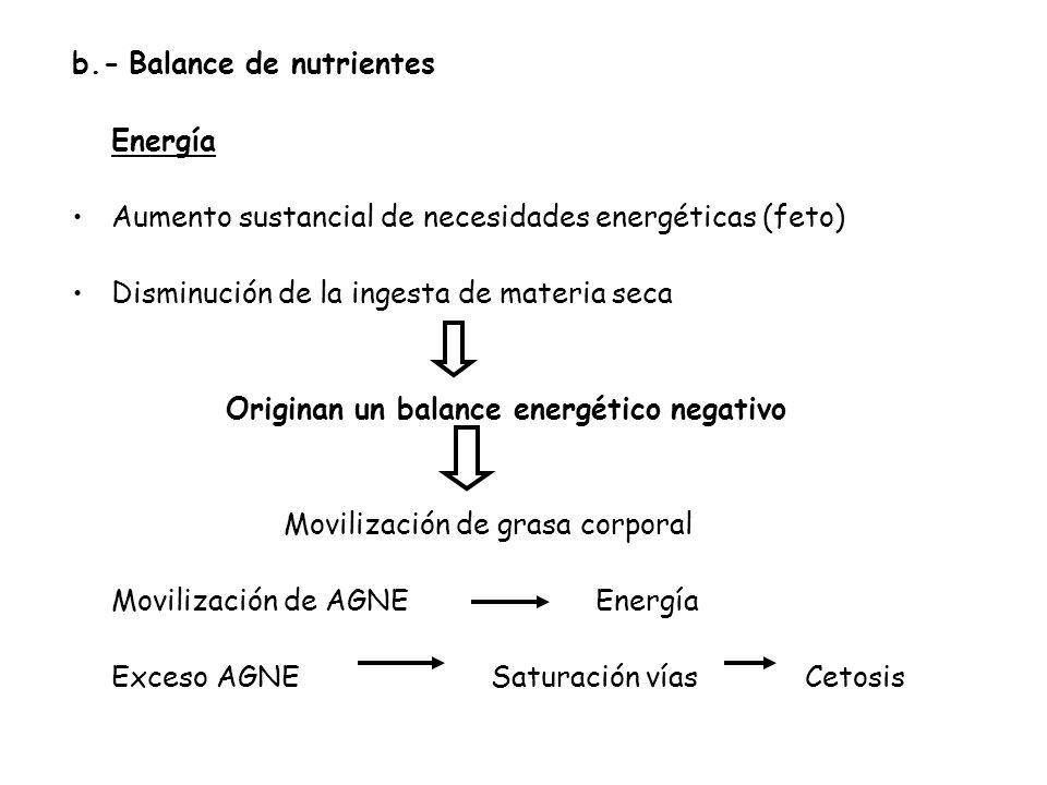 b.- Balance de nutrientes Energía Aumento sustancial de necesidades energéticas (feto) Disminución de la ingesta de materia seca Originan un balance energético negativo Movilización de grasa corporal Movilización de AGNE Energía Exceso AGNESaturación vías Cetosis
