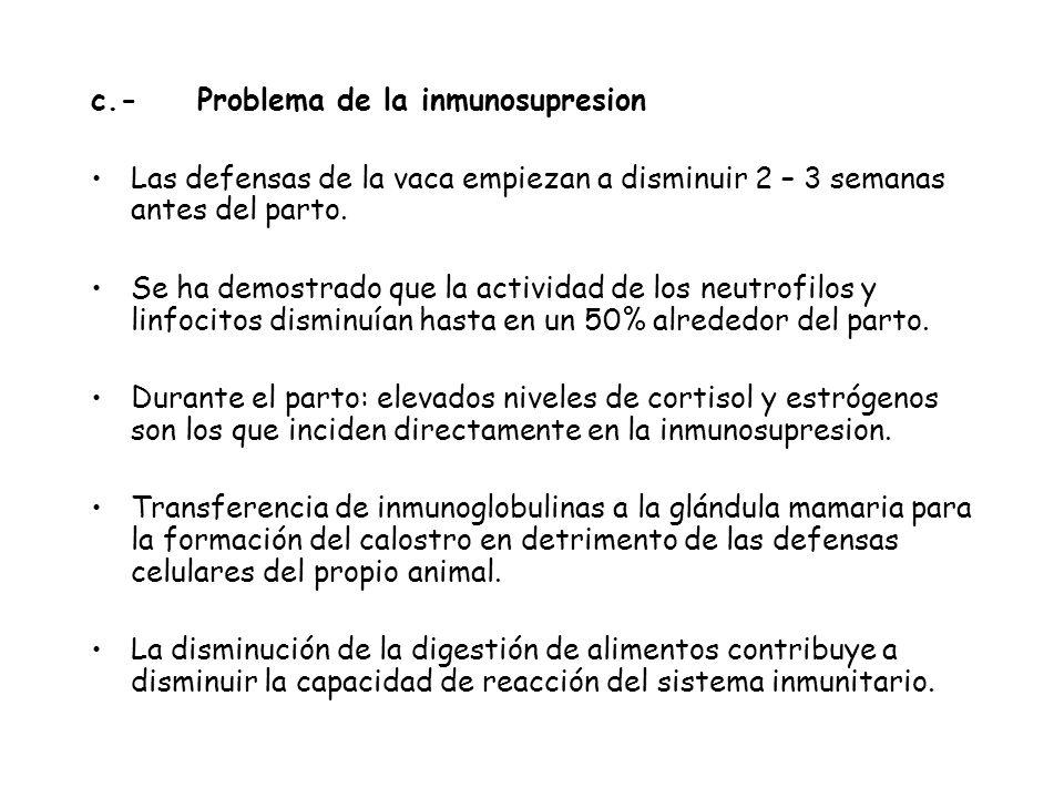 c.-Problema de la inmunosupresion Las defensas de la vaca empiezan a disminuir 2 – 3 semanas antes del parto.