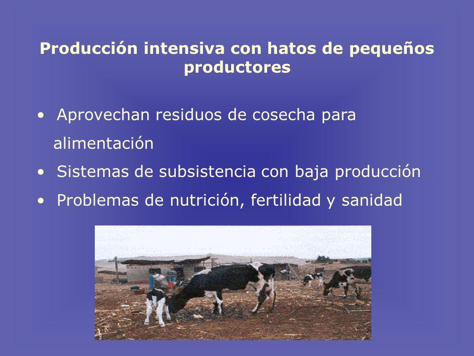 Producción intensiva con hatos de pequeños productores Aprovechan residuos de cosecha para alimentación Sistemas de subsistencia con baja producción Problemas de nutrición, fertilidad y sanidad