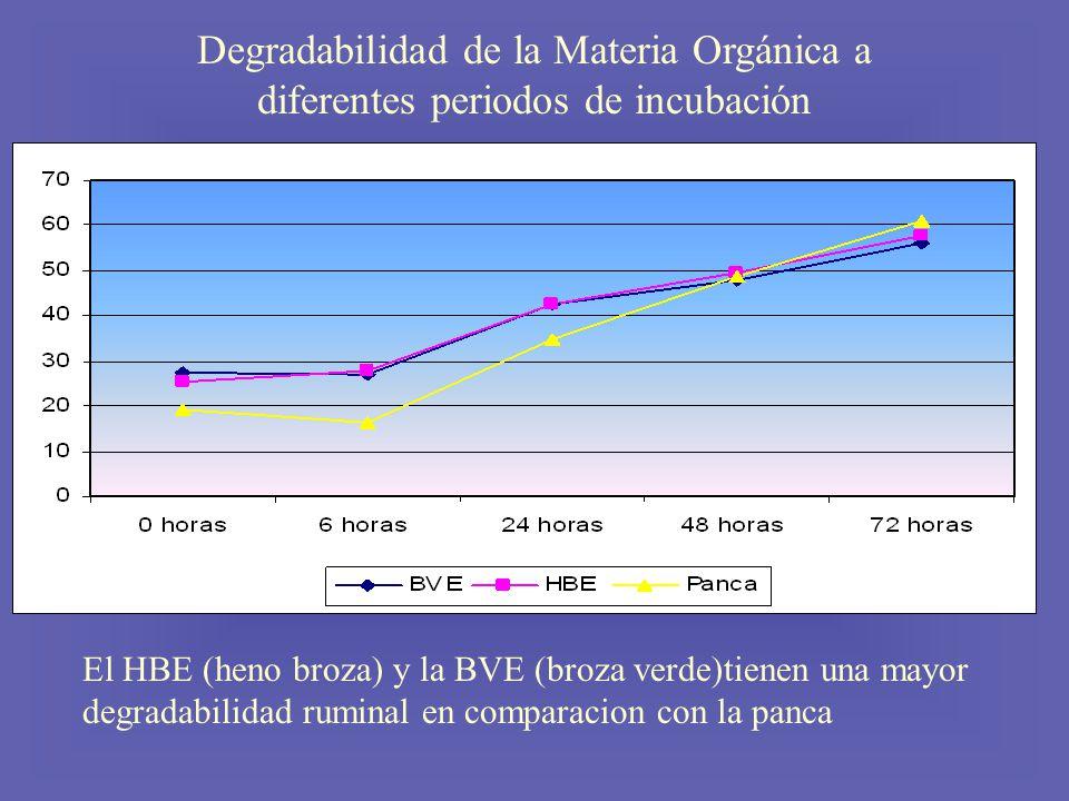 Degradabilidad de la Materia Orgánica a diferentes periodos de incubación El HBE (heno broza) y la BVE (broza verde)tienen una mayor degradabilidad ruminal en comparacion con la panca
