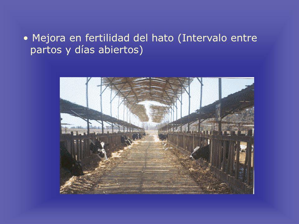 Mejora en fertilidad del hato (Intervalo entre partos y días abiertos)