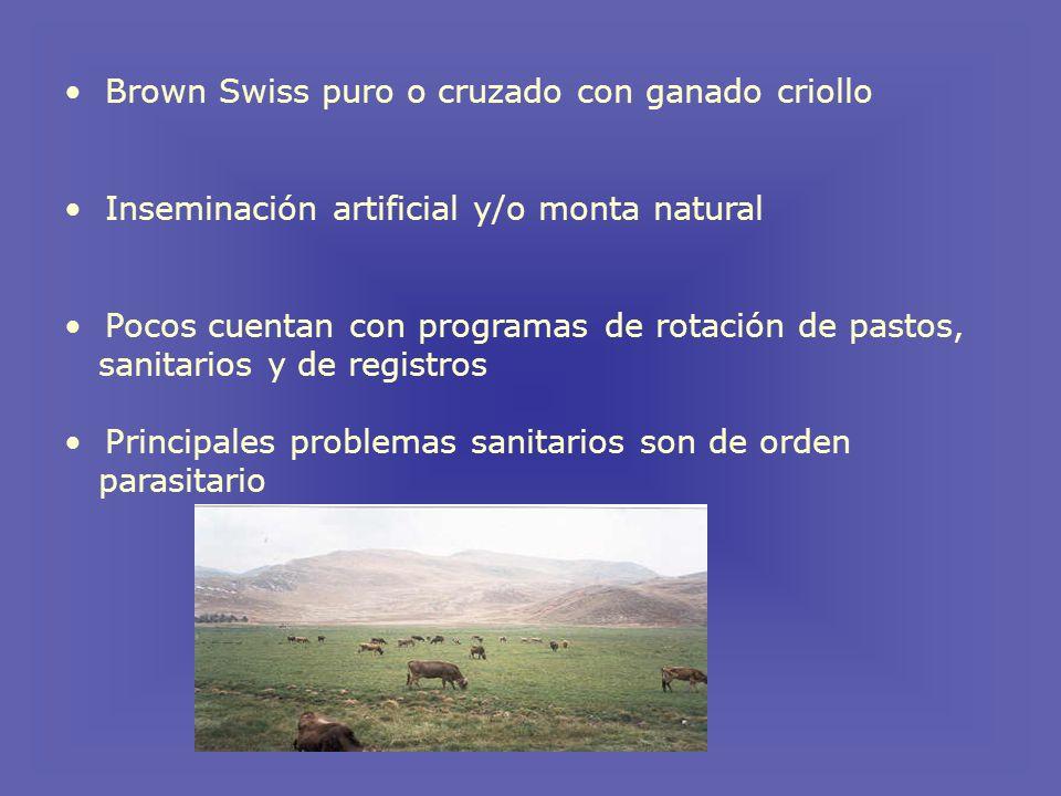 Brown Swiss puro o cruzado con ganado criollo Inseminación artificial y/o monta natural Pocos cuentan con programas de rotación de pastos, sanitarios y de registros Principales problemas sanitarios son de orden parasitario