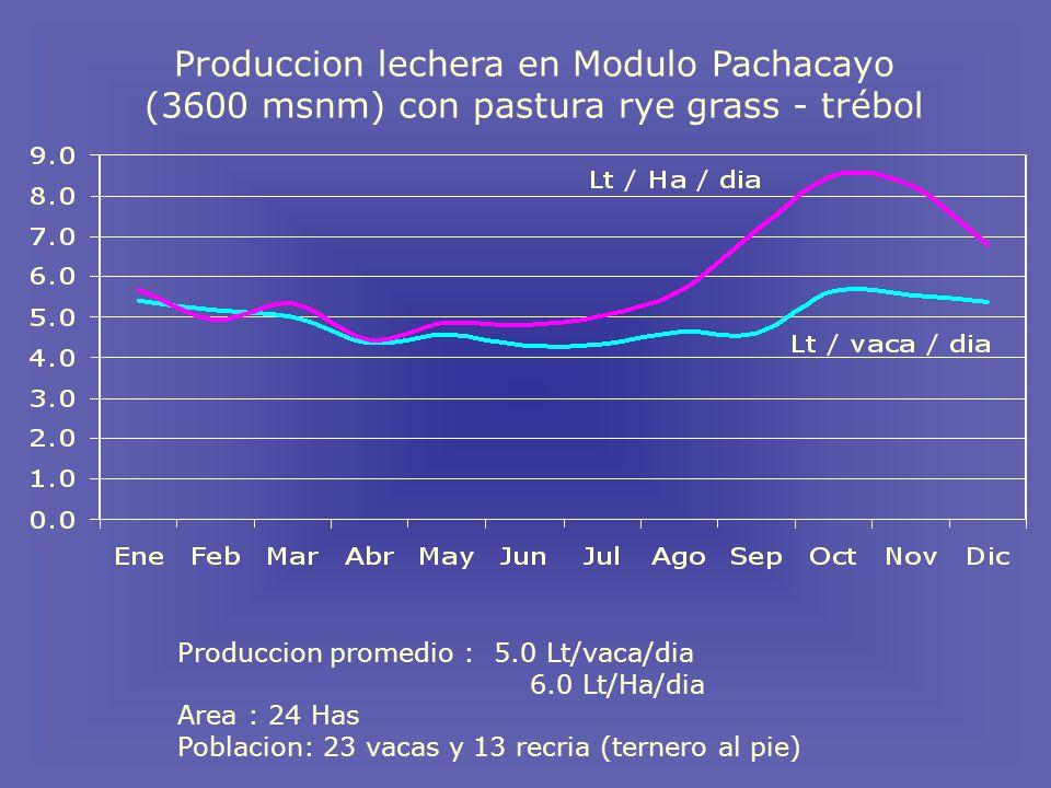 Produccion promedio : 5.0 Lt/vaca/dia 6.0 Lt/Ha/dia Area : 24 Has Poblacion: 23 vacas y 13 recria (ternero al pie) Produccion lechera en Modulo Pachacayo (3600 msnm) con pastura rye grass - trébol