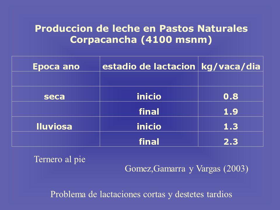 Produccion de leche en Pastos Naturales Corpacancha (4100 msnm) Problema de lactaciones cortas y destetes tardios Ternero al pie Gomez,Gamarra y Vargas (2003)