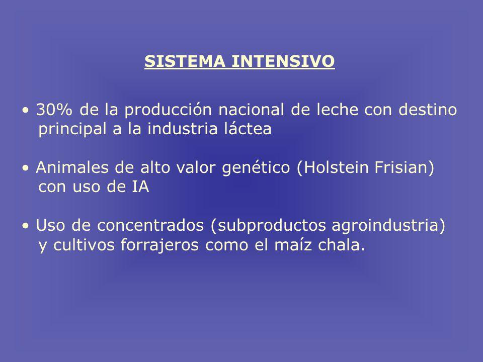 SISTEMA INTENSIVO 30% de la producción nacional de leche con destino principal a la industria láctea Animales de alto valor genético (Holstein Frisian) con uso de IA Uso de concentrados (subproductos agroindustria) y cultivos forrajeros como el maíz chala.