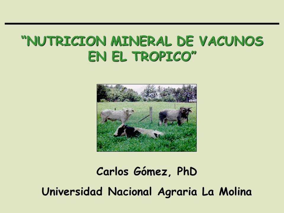 NUTRICION MINERAL DE VACUNOS EN EL TROPICO Carlos Gómez, PhD Universidad Nacional Agraria La Molina