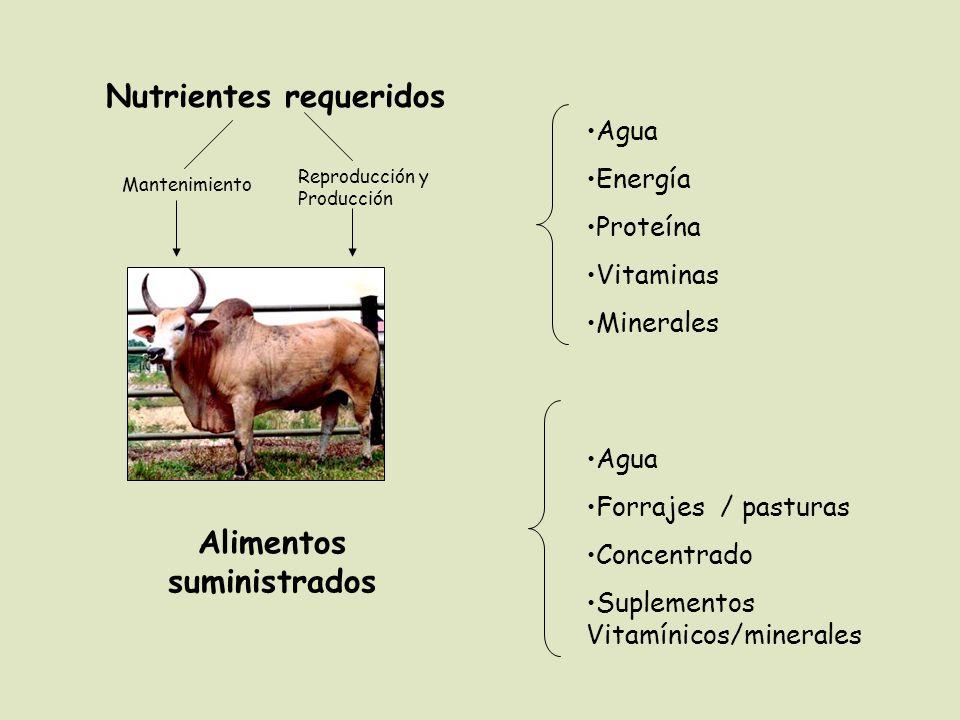 Agua Energía Proteína Vitaminas Minerales Agua Forrajes / pasturas Concentrado Suplementos Vitamínicos/minerales Alimentos suministrados Nutrientes requeridos Reproducción y Producción Mantenimiento