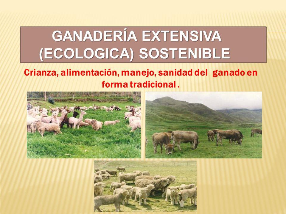 GANADERÍA EXTENSIVA (ECOLOGICA) SOSTENIBLE GANADERÍA EXTENSIVA (ECOLOGICA) SOSTENIBLE Crianza, alimentación, manejo, sanidad del ganado en forma tradi