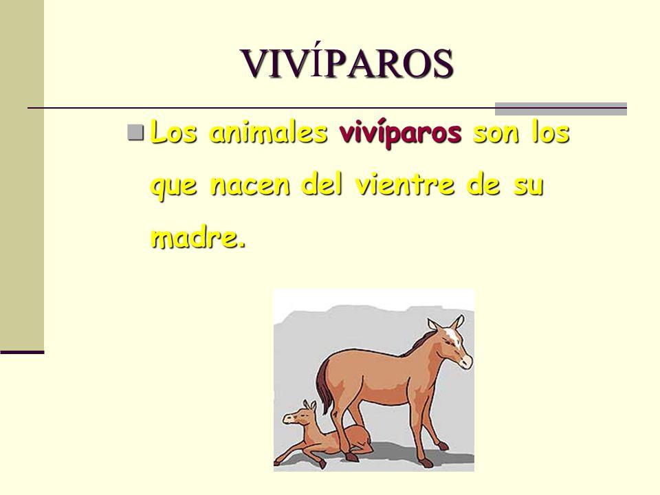 VIVPAROS VIVÍPAROS Los animales vivíparos son los que nacen del vientre de su madre. Los animales vivíparos son los que nacen del vientre de su madre.