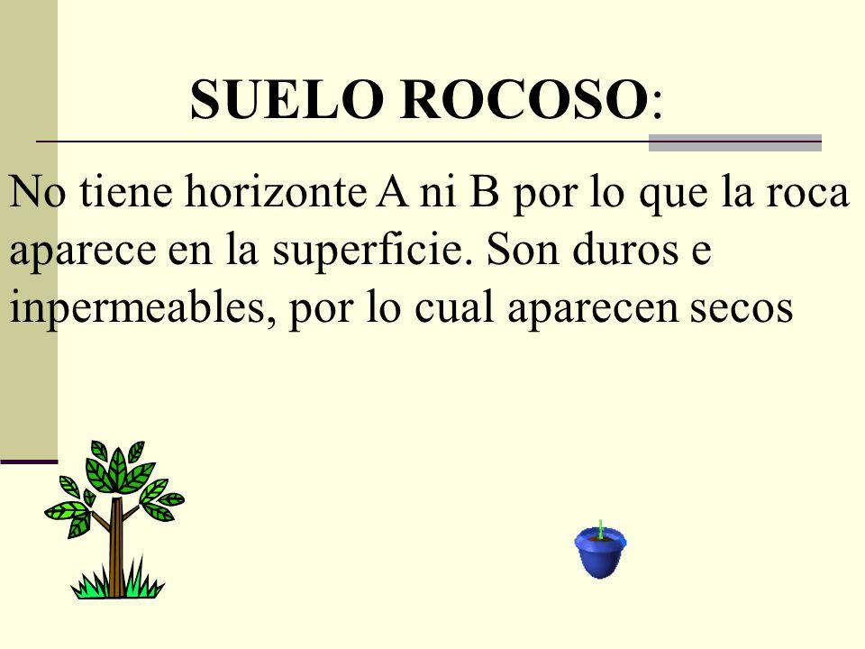 SUELO ROCOSO: No tiene horizonte A ni B por lo que la roca aparece en la superficie. Son duros e inpermeables, por lo cual aparecen secos