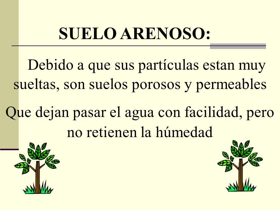 SUELO ARENOSO: Debido a que sus partículas estan muy sueltas, son suelos porosos y permeables Que dejan pasar el agua con facilidad, pero no retienen