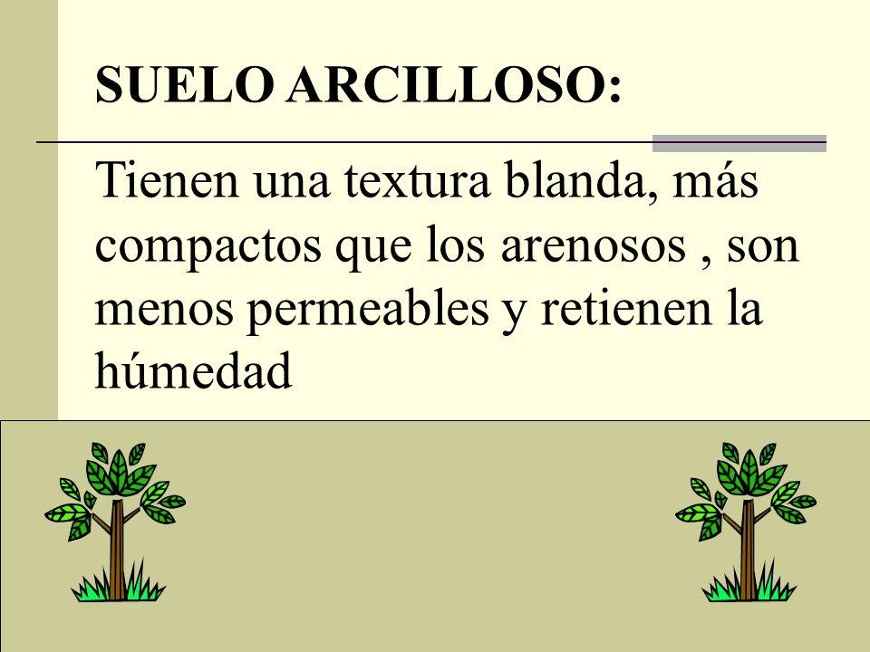 SUELO ARCILLOSO: Tienen una textura blanda, más compactos que los arenosos, son menos permeables y retienen la húmedad