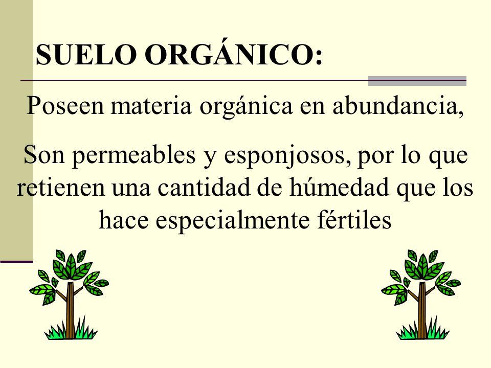 SUELO ORGÁNICO: Poseen materia orgánica en abundancia, Son permeables y esponjosos, por lo que retienen una cantidad de húmedad que los hace especialm