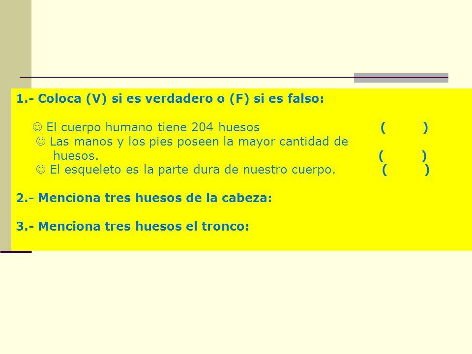 1.- Coloca (V) si es verdadero o (F) si es falso: El cuerpo humano tiene 204 huesos ( ) Las manos y los pies poseen la mayor cantidad de huesos. ( ) E