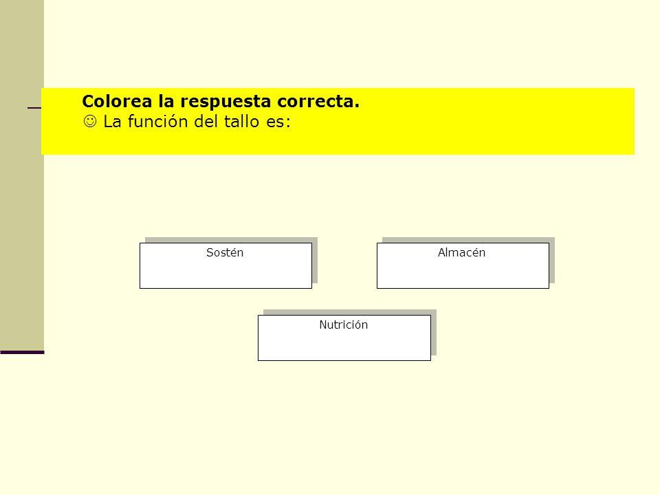 Sostén Almacén Nutrición Colorea la respuesta correcta. La función del tallo es:
