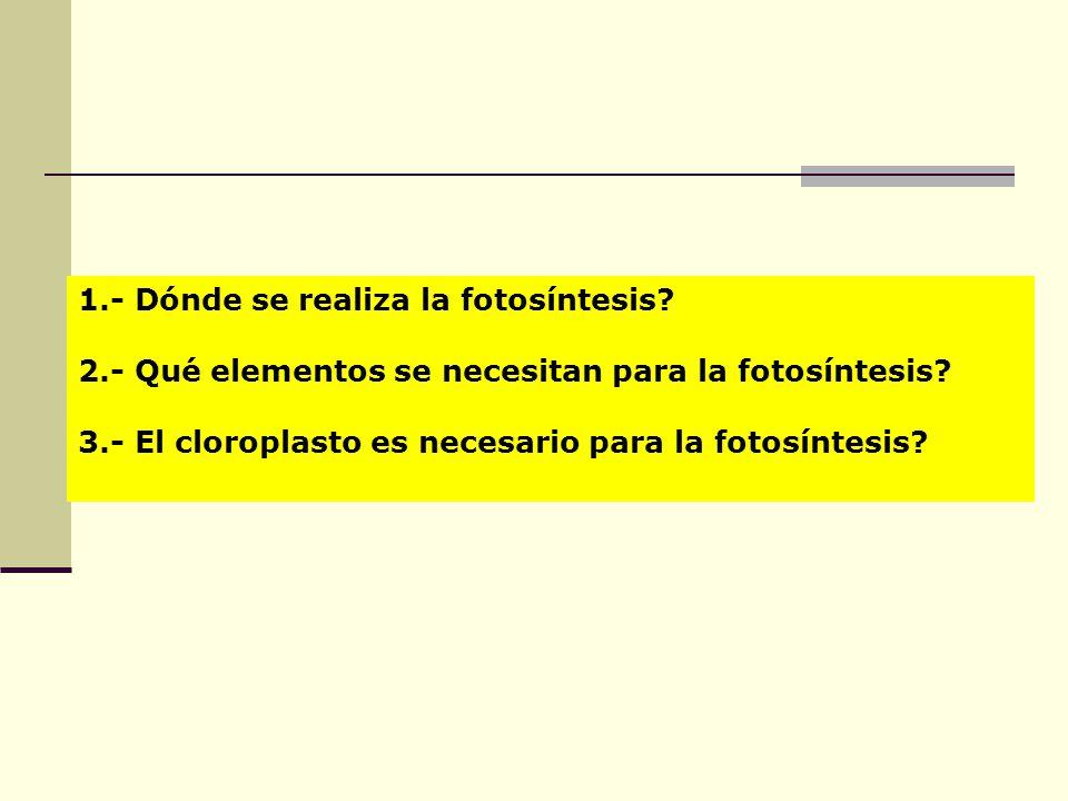 1.- Dónde se realiza la fotosíntesis? 2.- Qué elementos se necesitan para la fotosíntesis? 3.- El cloroplasto es necesario para la fotosíntesis?
