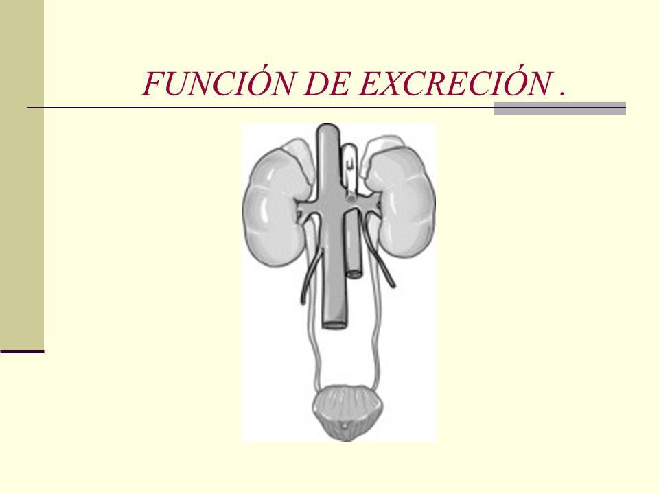 FUNCIÓN DE EXCRECIÓN.
