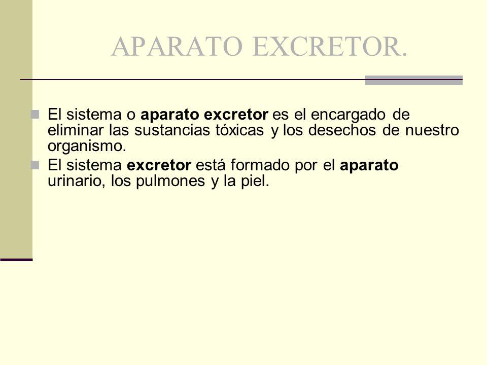 APARATO EXCRETOR. El sistema o aparato excretor es el encargado de eliminar las sustancias tóxicas y los desechos de nuestro organismo. El sistema exc