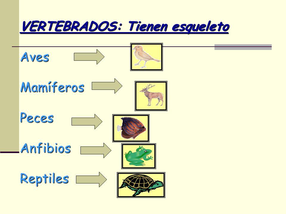 VERTEBRADOS: Tienen esqueleto Aves MamíferosPecesAnfibiosReptiles