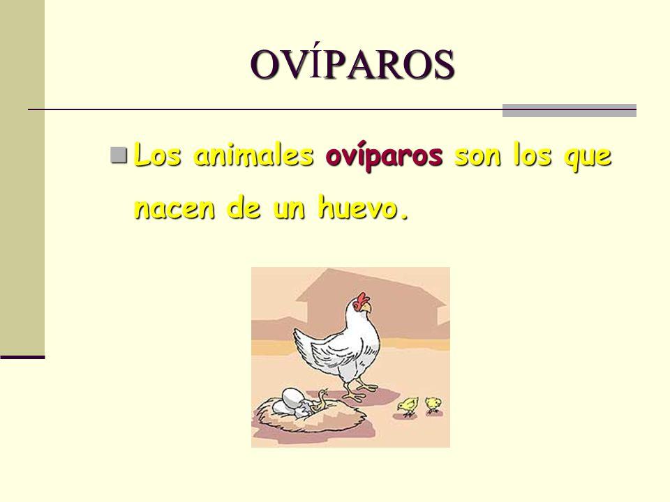 OVPAROS OVÍPAROS Los animales ovíparos son los que nacen de un huevo. Los animales ovíparos son los que nacen de un huevo.