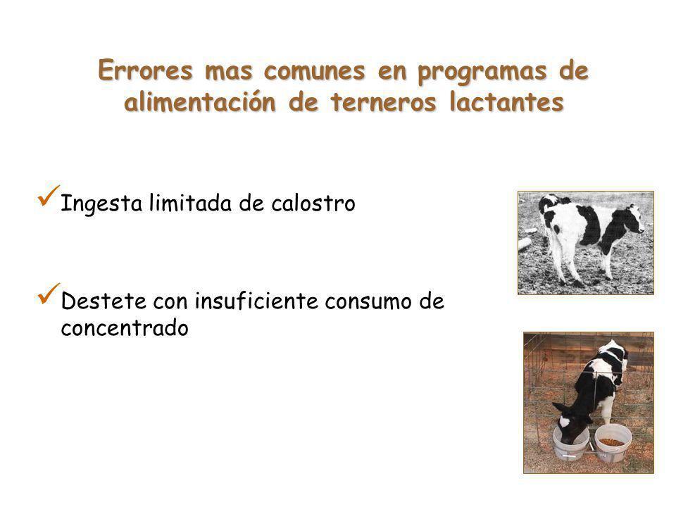 Ingesta limitada de calostro Destete con insuficiente consumo de concentrado Errores mas comunes en programas de alimentación de terneros lactantes