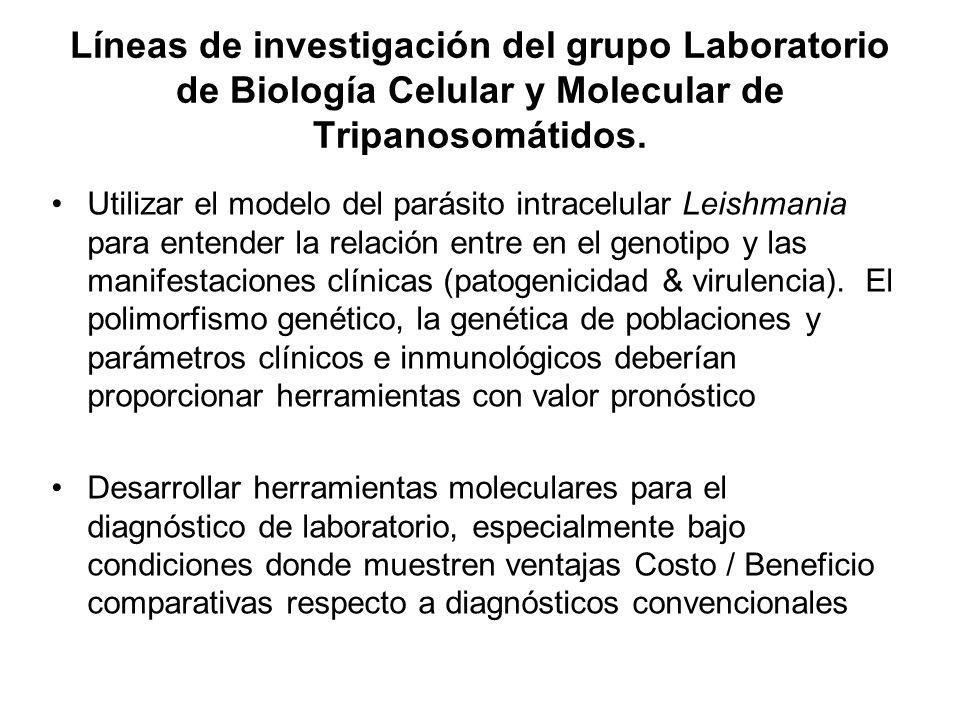 Líneas de investigación del grupo Laboratorio de Biología Celular y Molecular de Tripanosomátidos. Utilizar el modelo del parásito intracelular Leishm