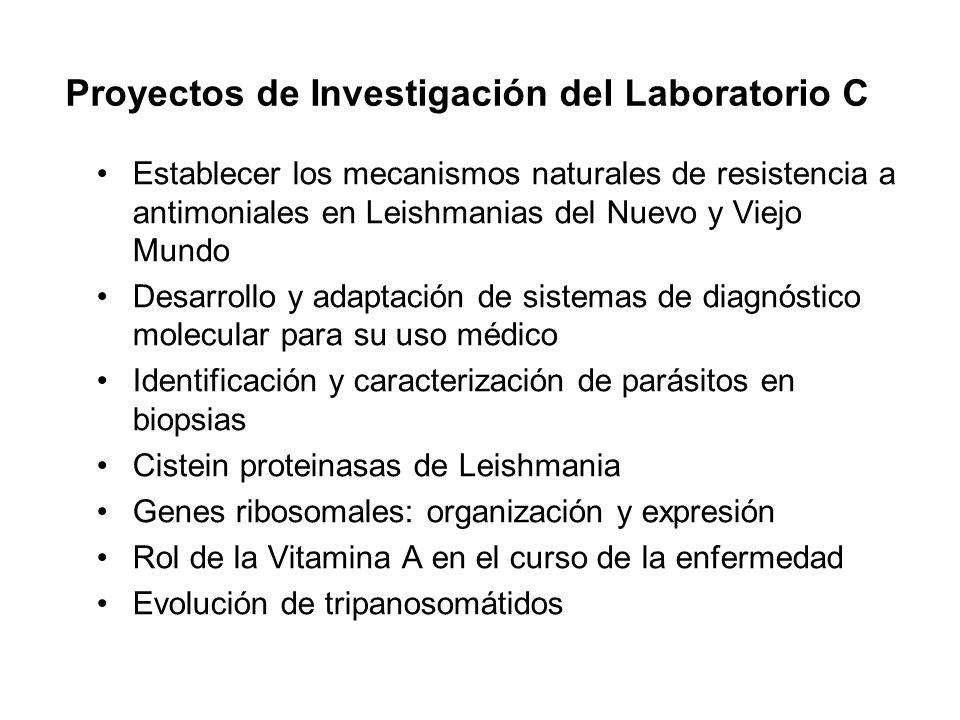 Proyectos de Investigación del Laboratorio C Establecer los mecanismos naturales de resistencia a antimoniales en Leishmanias del Nuevo y Viejo Mundo