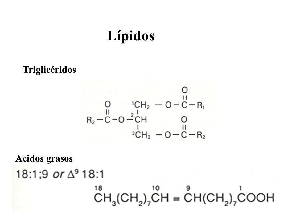 Lípidos Acidos grasos Triglicéridos