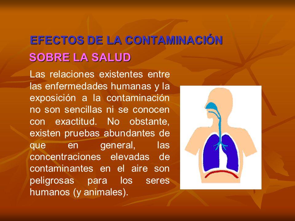EFECTOS DE LA CONTAMINACIÓN Las relaciones existentes entre las enfermedades humanas y la exposición a la contaminación no son sencillas ni se conocen