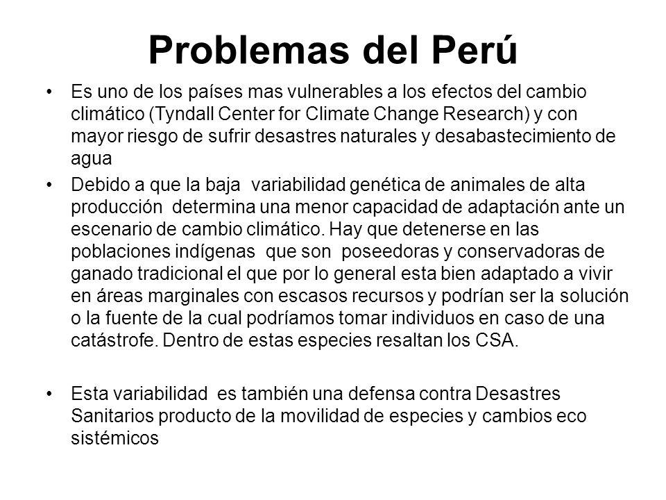 Problemas del Perú Es uno de los países mas vulnerables a los efectos del cambio climático (Tyndall Center for Climate Change Research) y con mayor riesgo de sufrir desastres naturales y desabastecimiento de agua Debido a que la baja variabilidad genética de animales de alta producción determina una menor capacidad de adaptación ante un escenario de cambio climático.