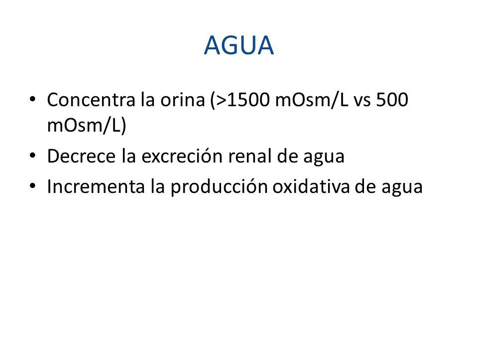 AGUA Concentra la orina (>1500 mOsm/L vs 500 mOsm/L) Decrece la excreción renal de agua Incrementa la producción oxidativa de agua