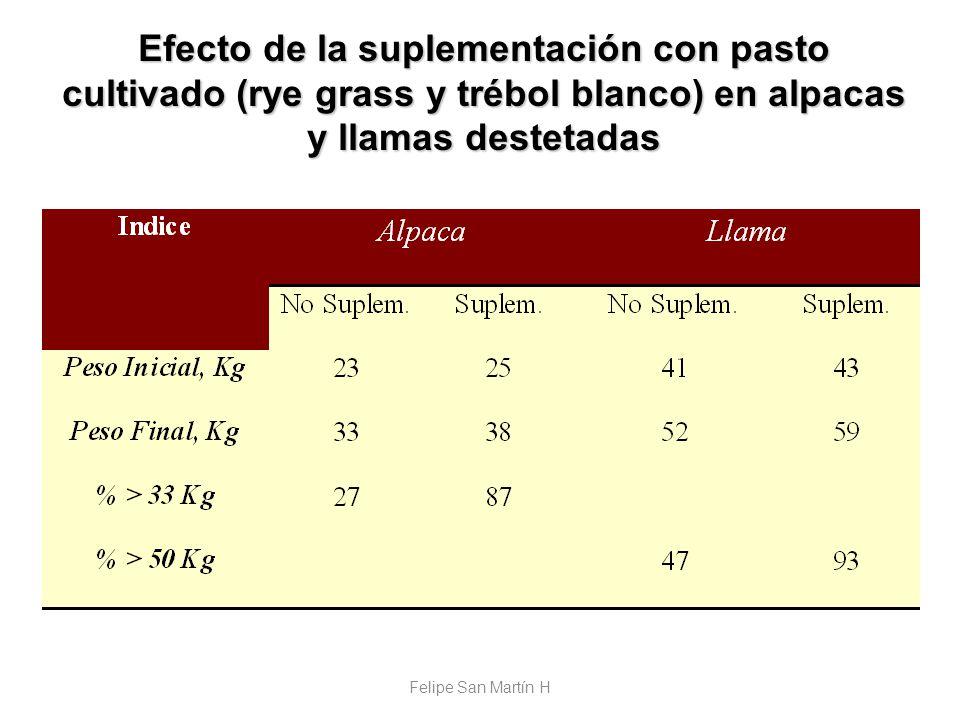 Efecto de la suplementación con pasto cultivado (rye grass y trébol blanco) en alpacas y llamas destetadas Felipe San Martín H