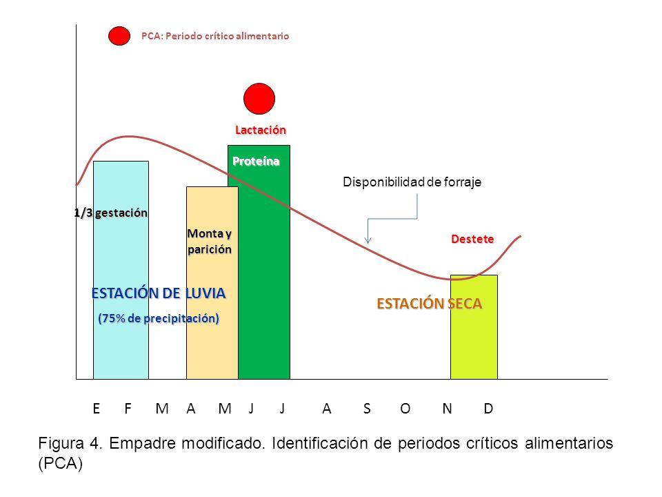 Lactación Destete 1/3 gestación EFMAMJJASOND ESTACIÓN SECA ESTACIÓN DE LUVIA (75% de precipitación) Monta y parición PCA: Periodo crítico alimentario Proteína Figura 4.