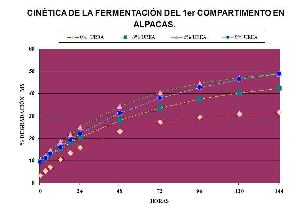 CINÉTICA DE LA FERMENTACIÓN DEL 1er COMPARTIMENTO EN ALPACAS.
