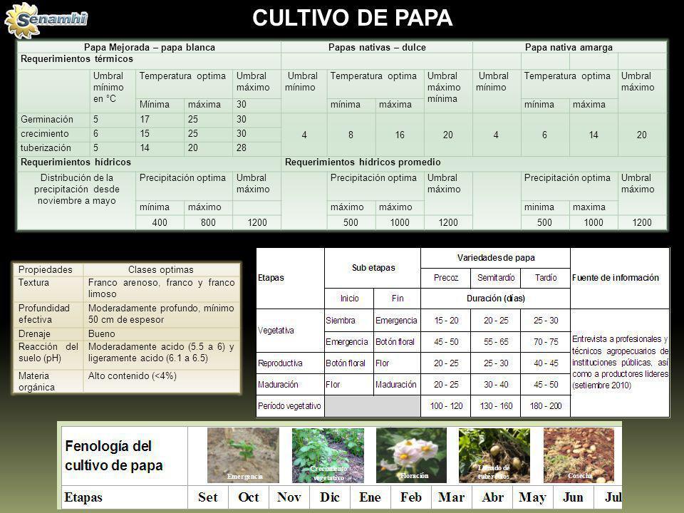 Papa Mejorada – papa blancaPapas nativas – dulcePapa nativa amarga Requerimientos térmicos Umbral mínimo en °C Temperatura optimaUmbral máximo Umbral