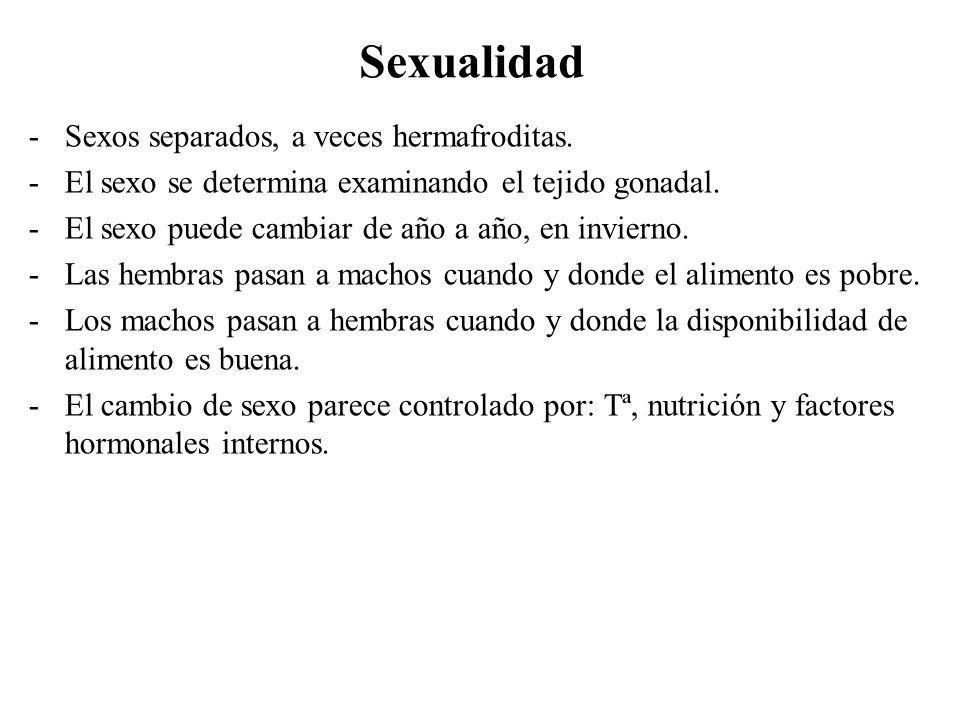 Sexualidad -Sexos separados, a veces hermafroditas. -El sexo se determina examinando el tejido gonadal. -El sexo puede cambiar de año a año, en invier