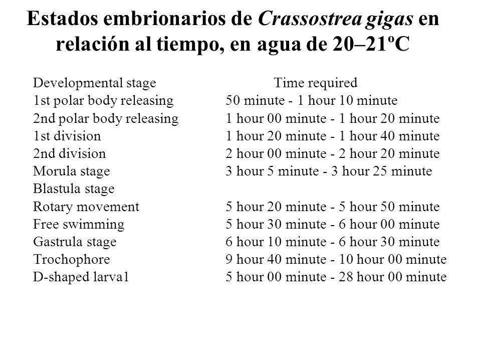 Estados embrionarios de Crassostrea gigas en relación al tiempo, en agua de 20–21ºC Developmental stageTime required 1st polar body releasing50 minute