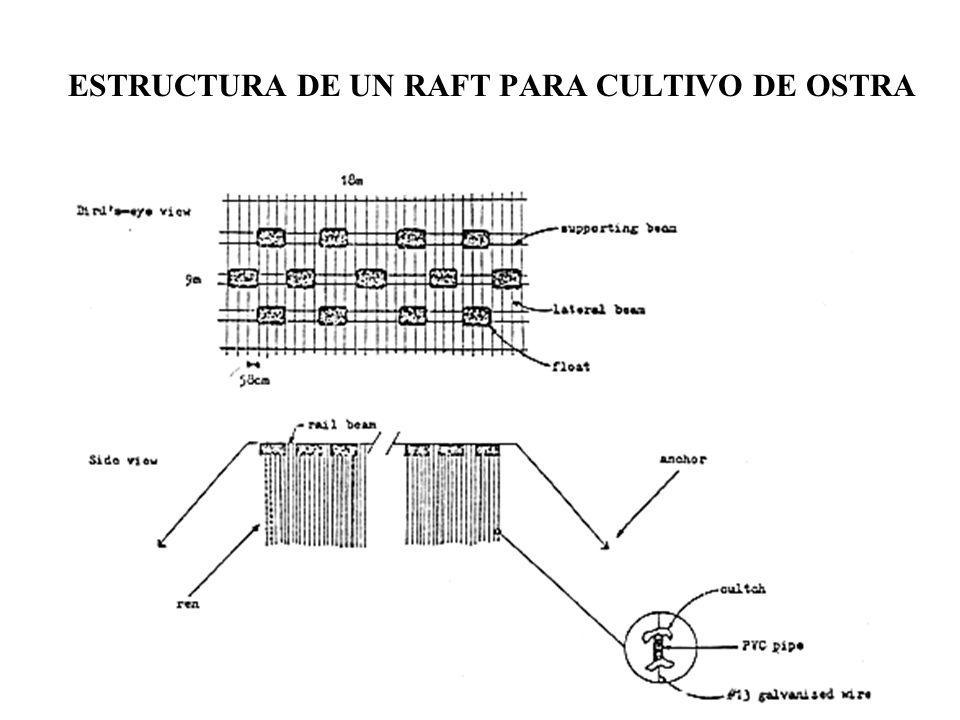 ESTRUCTURA DE UN RAFT PARA CULTIVO DE OSTRA