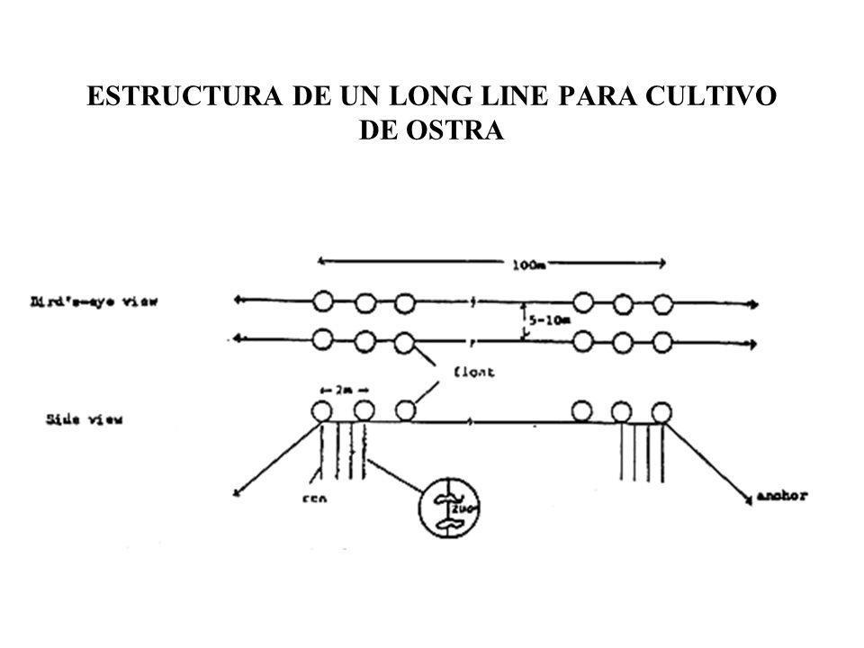 ESTRUCTURA DE UN LONG LINE PARA CULTIVO DE OSTRA