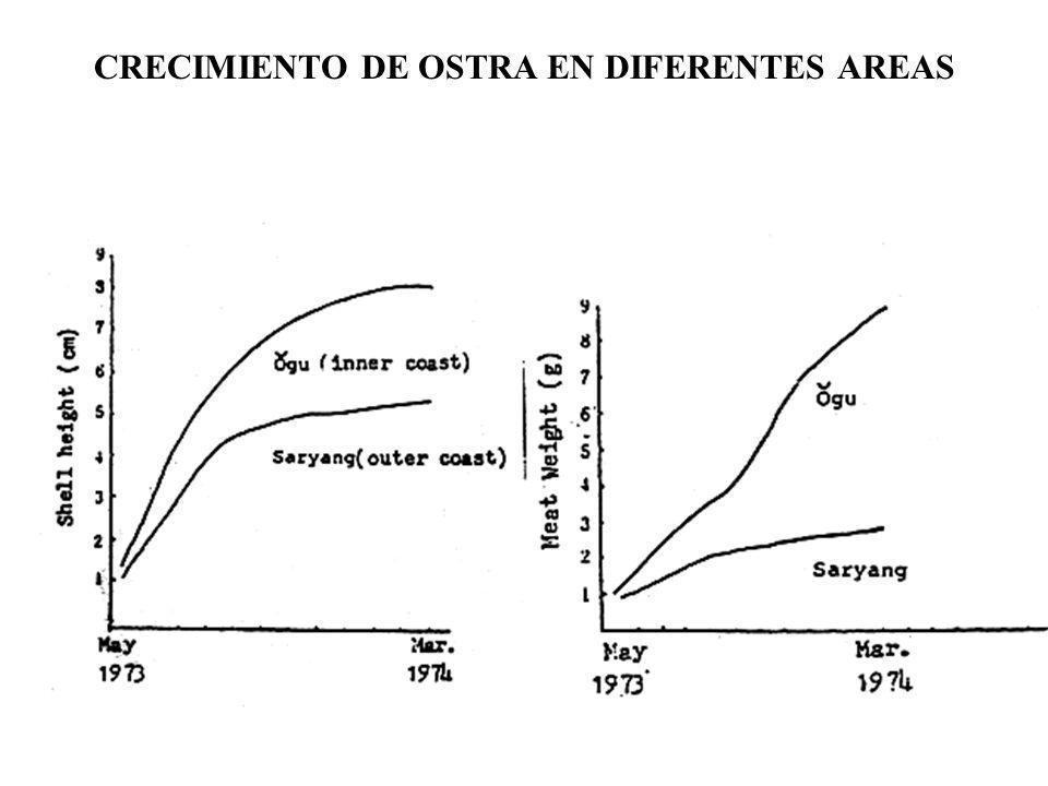 CRECIMIENTO DE OSTRA EN DIFERENTES AREAS