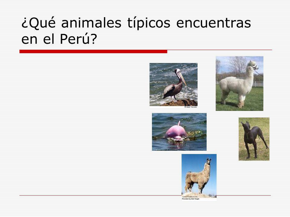 ¿Qué animales típicos encuentras en el Perú?